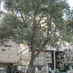 Small_epoch_products_parthenon_olive_by_timandpaula