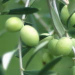 Small_epoch_products_green_olives